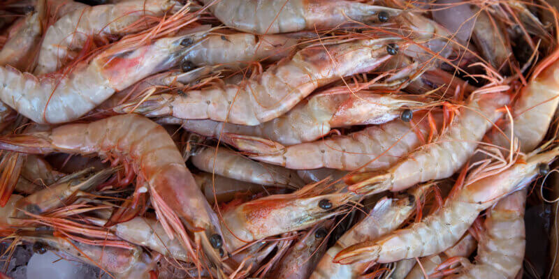 Análisis del camarón ecuatoriano