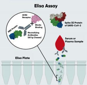 Anticuerpos Neutralizantes y el ensayo de Elisa-04